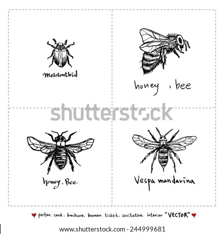 Set of insect illustrations - Hand drawn sketch - vector - stock vector