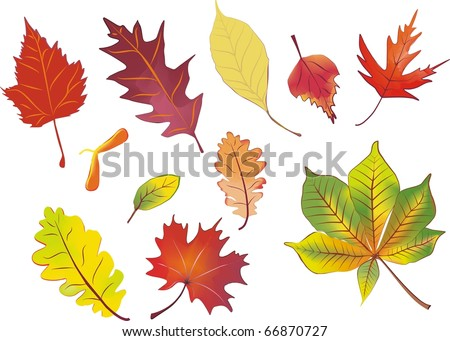 set of isolated autumn leaves vector illustration in aquarelle colors - stock vector