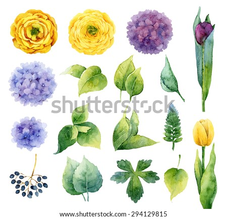 Set of isolated elements of flowers and leaves. Vector illustration