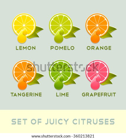 Set of juicy citruses placed on pale background - stock vector