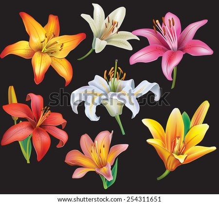 Set of lilies heads on black background - stock vector
