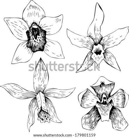 Set of line drawing orchids, hand drawn vector illustration
