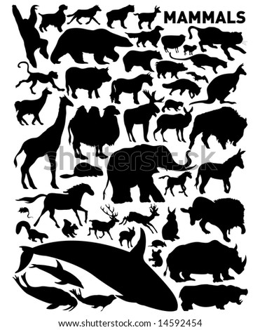 set of mammals