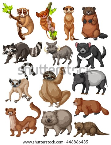 Set of many wild animals illustration
