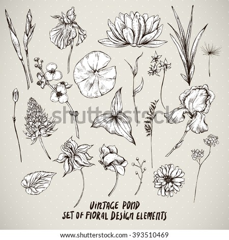 Set of monochrome vintage pond water flowers vector elements, Botanical flower decoration shabby chic illustration reeds, lily, iris, isolated natural floral wildflowers leaves and twigs. - stock vector