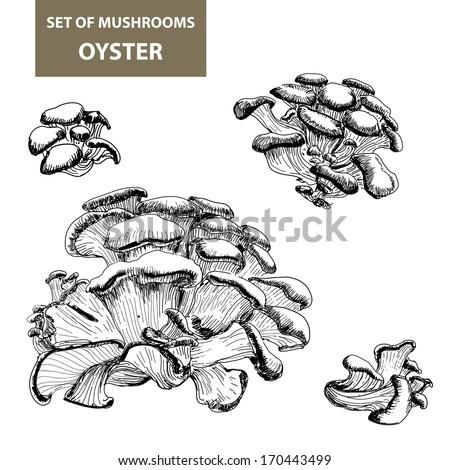 Set of mushrooms. Oyster mushrooms. Vector hand drawn illustration. - stock vector