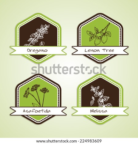 Set of Natural Organic Product badges. Labels for Spices : Oregano, Lemon, Melissa, Asafoetida - stock vector