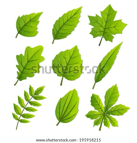 set of nine spring leaves of different trees on a white background