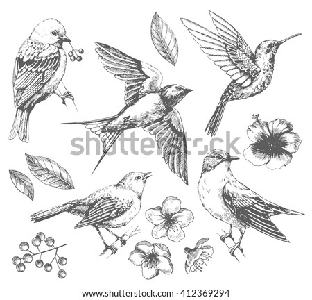 Set of of birds and flowers line drawings ink drawing hand drawn illustration