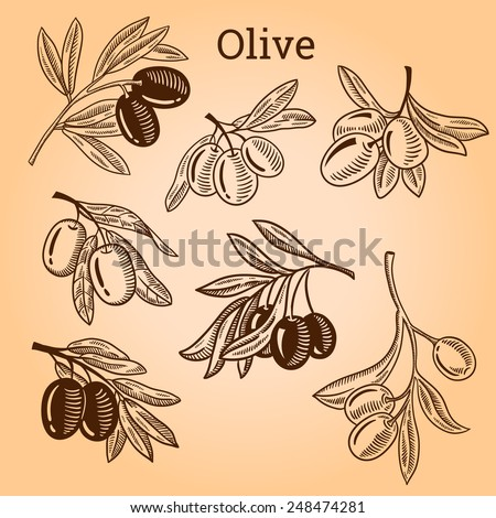 Set of olive tree branch. Engraving hand drawn style. Vector sketch - stock vector