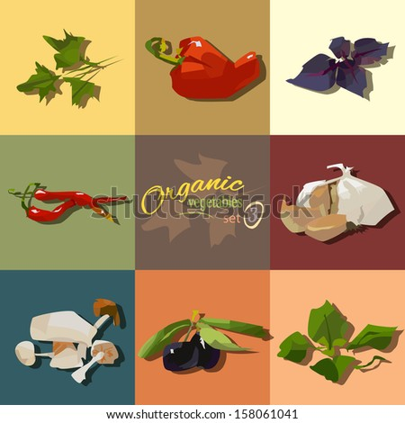 Set of organic vegetables and spices and herbs - stock vector