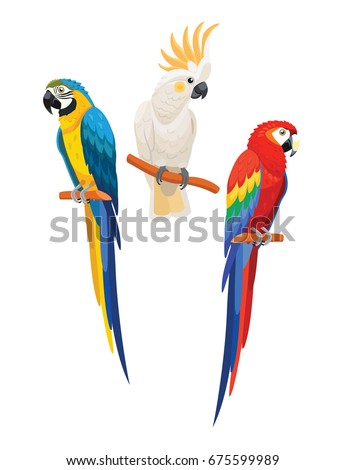 Set of parrots. Vector illustration.