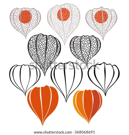 Set of physalis  isolated on white background.  Hand drawn vector illustration, sketch. Elements for design.