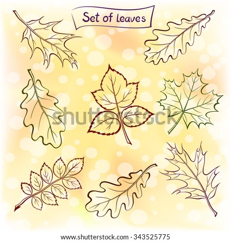Set of Pictograms Plant Leaves, Oak, Iberian Oak, Maple, Raspberry, Dogrose. Nature Yellow and Orange Autumn Background. Eps10, Contains Transparencies. Vector - stock vector
