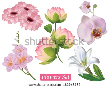 Set of pink flowers on a white background, vector.  Lotus, gerbera,  freesia, orchids,  lily flower. - stock vector