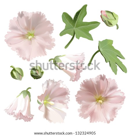 Set of Pink mallow flowers on white background. Vector illustration - stock vector