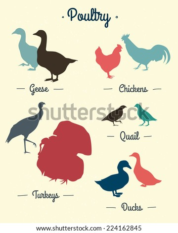 Set of poultry silhouettes made in vector in retro style - stock vector