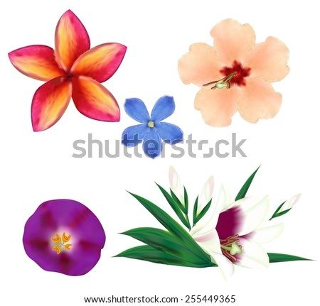 Set of realistic flowers, part 2. Vector eps10. - stock vector