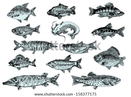 set of river fishes - stock vector