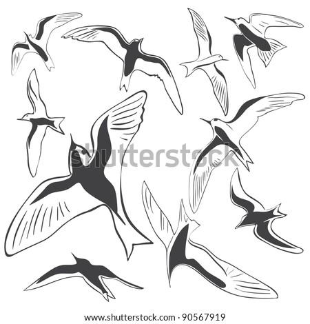 Set of Sea Bird icons - stock vector