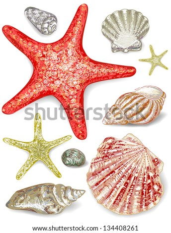Set of seashells. Vector illustration