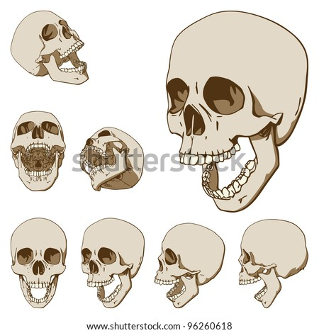 Set of Seven Drawings of Human Skull. Vector Illustration - stock vector