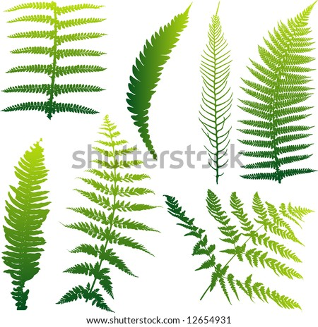 Set of seven vector ferns from New Zealand. Colors can be easily changed. - stock vector