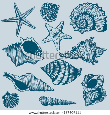 Set of Shells - Illustration