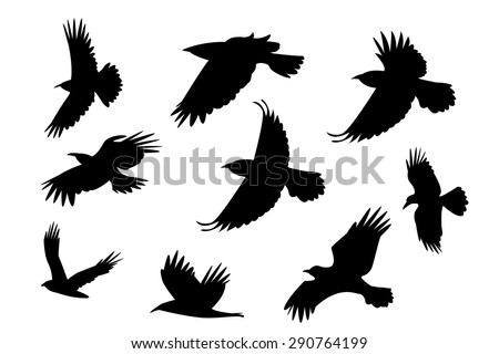 Set of silhouette flying raven bird with no leg. isolated on white background - stock vector