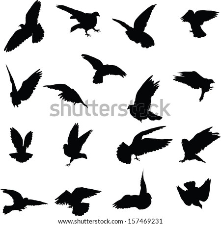 Set of 17 silhouettes birds - stock vector