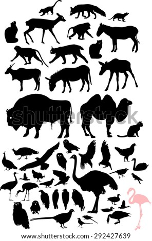 Set of silhouettes of birds and animals