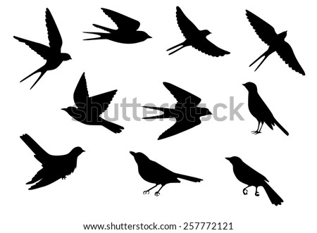Aninimal Book: Flying Sparrow Silhouette Stock Images, Royalty-Free ...