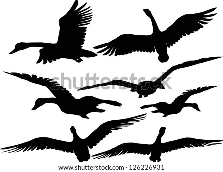 Set of silhouettes of flying geese - stock vector