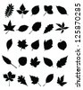 Set of silhouettes of foliage-vector - stock vector