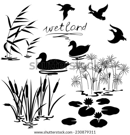 Set of silhouettes of water plants and ducks.  - stock vector