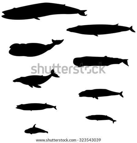 set of silhouettes of whales on a white background - stock vector