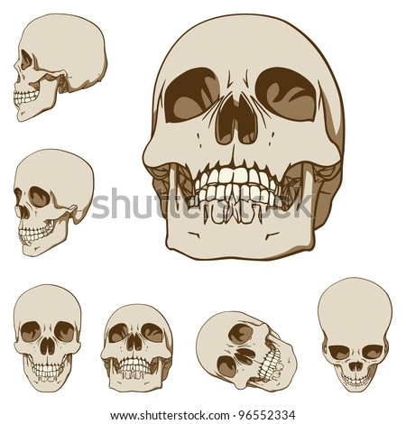 Set of Six Drawings of Human Skull. Vector Illustration - stock vector