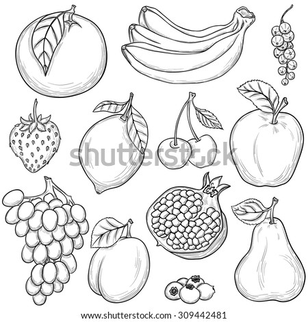 Set of sketched fruits isolated on white background - stock vector