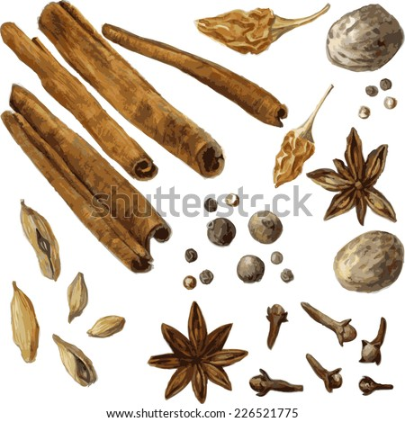 set of spice, drawing by watercolor, hand drawn vector illustration - stock vector