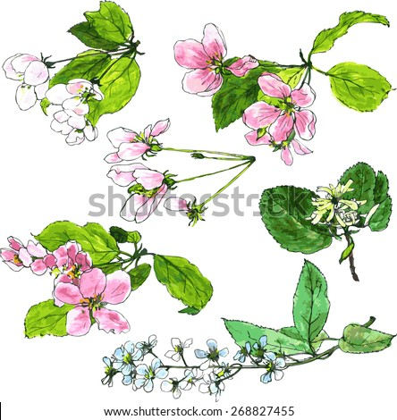 set of spring flowers of trees,apple blossoms, cherry blossoms, hand drawn design element, vector illustration - stock vector
