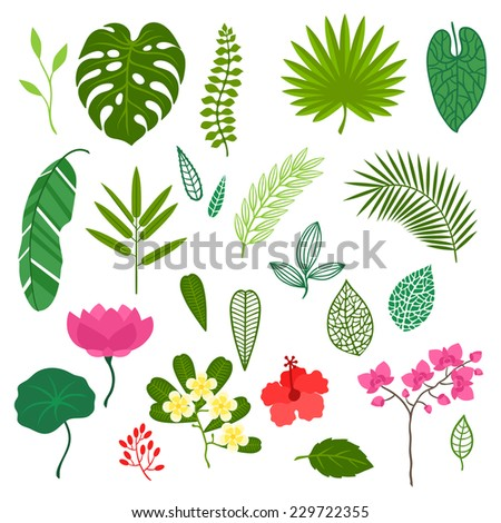 Set of stylized tropical plants, leaves and flowers. - stock vector