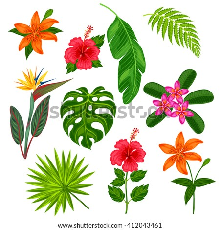 Set of stylized tropical plants, leaves and flowers. Objects for decoration, design on advertising booklets, banners, flayers. - stock vector