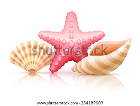 Set of summer sea shells and starfish. Eps10 vector illustration. Isolated on white background - stock vector