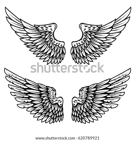 Set of the eagle wings isolated on white background. Design element for logo, label, emblem, sign. Vector illustration.