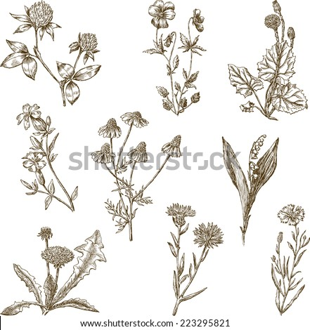 set of the wild flowers - stock vector