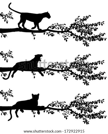 Set of three editable vector silhouettes of a leopard on a tree branch with leopards as separate objects - stock vector