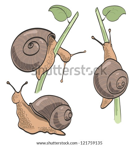 Set of three snails, isolated on white - stock vector
