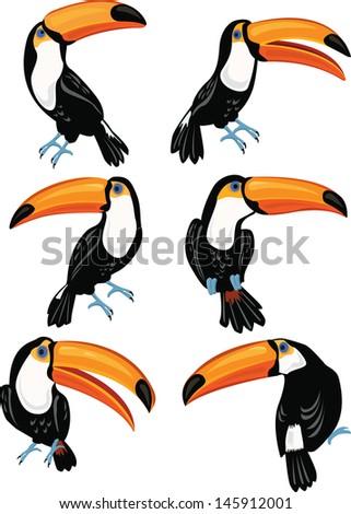 Set of toucans - stock vector