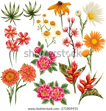 Set of traditional and tropical flowers and leaves stylized like watercolor - stock vector