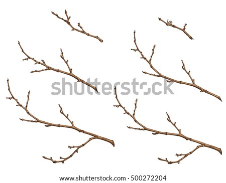 set of tree branches, twigs of different sizes, line drawing with colors,  vector